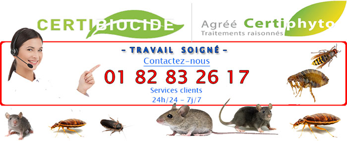 Insectes Courcouronnes